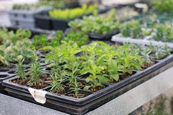 herbs516.jpg